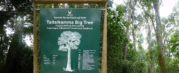 Wandern im Tsitsikamma-Nationalpark