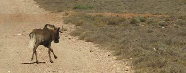 Durch die Karoo