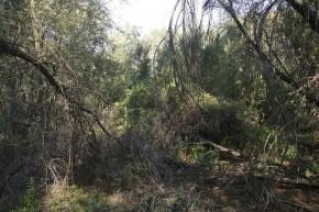 Urwald pur im Delta des Orange River.