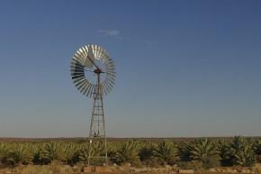 Auf der Farm in Klein Begin stehen unzählige Palmen, die so gar nicht in das Bild der Wüste passen.