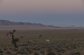 Pastellfarben bestimmen das Bild am Rande der Namib kurz vor Sonnenaufgang