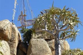 Hoch über Springbok strahlt, wie sollte es anders sein - ein Springbock.