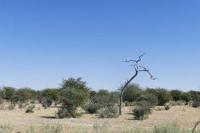 ... später ist das Unwetter im Abzug. Die Fahrt durch Botswana ist meistenteils recht eintönig.