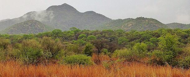 Dass es in Namibia Bergregenwald gibt, wussten wir bis zu diesem Gewitter nicht.