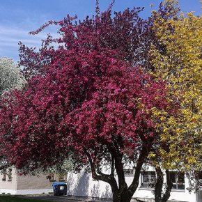 Kalter Frühling