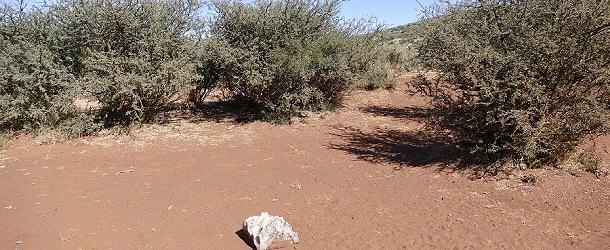 Roter Sand an der Red Sand Country Lodge. Im Vordergrund liegt ein Salzleckstein.