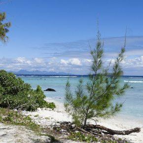 Auf der Suche nach der Blauen Mauritius