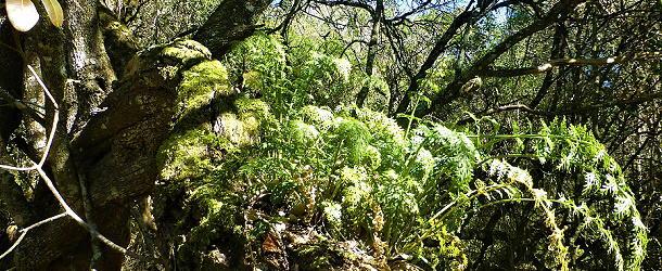 Wandern in Südafrika, Port Elizabeth, Island Nature Reserve