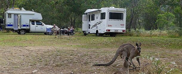 Die Kängurus frühstücken mit uns