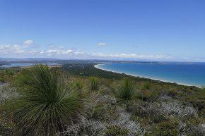 Endlose Sandstrände und glasklares Meerwasser, so begrüßt uns Tasmanien