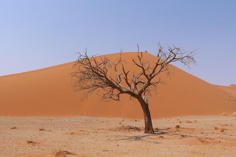Erinnerungen an Afrika, Teil 2