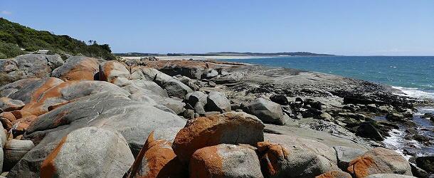 Bunte Steine am Strand von Bridport. Die intensive Färbung wird durch Algen hervorgerufen.