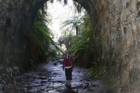 Eine abenteuerliche Wanderung führte uns durch einen ehemaligen Eisenbahntunnel. Als die Eingänge nicht mehr zu sehen waren, beleuchteten hunderte von Glühwürmchen den Weg.