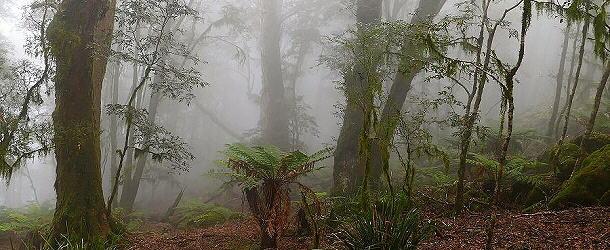 Der stürmische Wind treibt oft die Wolken an die Berghänge des Australischen Gondwana Regenwälder