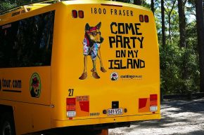 Endlich läuft uns mal ein Dingo über den Weg...