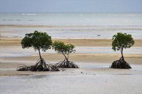 Die Mangroven geben jedoch auch bei Regenwetter eine gute Figur ab.