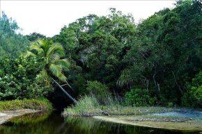 Wenn der Urwald auf die Küste trifft, münden glasklare Bäche ins Meer.