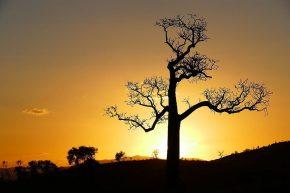 Endlich sehen wir wieder unsere geliebten Baobab-Bäume