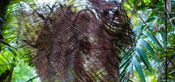 Der Regenwald bei Mission Beach zaubert bizarre Formen.