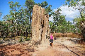 Die Hügel der Spinifex-Termiten haben oft Ähnlichkeit mit einer Kathedrale. Im Litchfield Nationalpark werden sie nicht selten bis 6 Meter hoch.