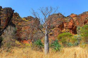... und leuchtende Felsen in der Abendsonne. So macht die Fahrt durch die Kimberleys Spaß.