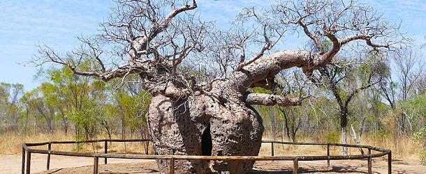 der Gefängnisbaum von Derby