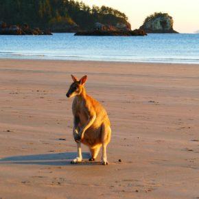 Reisepraxis Australien – unsere Eindrücke und Erfahrungen